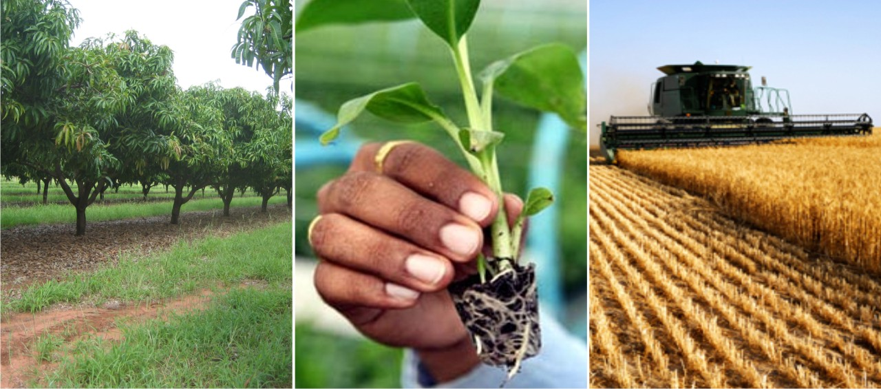 Consulting-in-Hitech-Agriculture